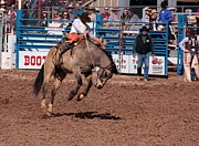 Rodeos Photo Posters - The Toe Dancer Poster by Joe Kozlowski