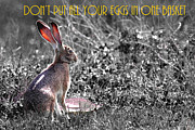 Wingsdomain Art and Photography - The Tortoise and The Hare Dont Put All Your Eggs In One Basket 40D12379 bw