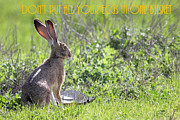 Wingsdomain Art and Photography - The Tortoise and The Hare Dont Put All Your Eggs In One Basket 40D12379