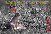 Wingsdomain Art and Photography - The Tortoise and The Hare Dont Put All Your Eggs In One Basket Easter Sunday 40D12379 bw