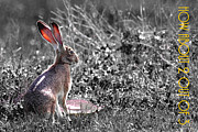 Wingsdomain Art and Photography - The Tortoise and The Hare How About Two Out of Three 40D12379 black and white