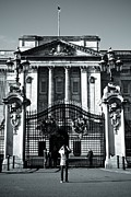 Buckingham Palace Digital Art Metal Prints - The Tourist Metal Print by Susy Gascoyne