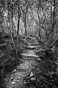 Jamie Pham - The Trail - Pipiwai