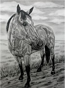 Horse Drawings Prints - The trail of a Buckskin Print by Lucka SR