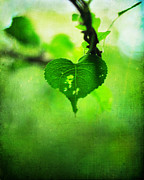 Valentines Day Framed Prints - The Trailing Vine Framed Print by Rebecca Sherman