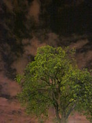 Guy Ricketts Photography Prints - The Tree Accepts Me Print by Guy Ricketts