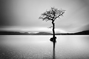 Scotland Images Framed Prints - The Tree Framed Print by Grant Glendinning