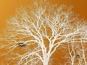 Katina Cote - The Tree