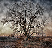 Winter Scenes Rural Scenes Prints - The Tree of Life Print by Kimberleigh Ladd