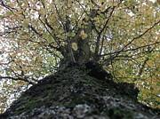 The Tree Print by Tony Stark