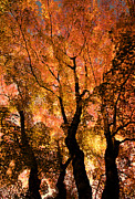 The Trees Dance As The Sun Smiles Print by Don Schwartz