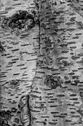 Bark Design Photos - The Trees Have Eyes by Heidi Smith