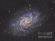 Interstellar Space Photos - The Triangulum Galaxy by Reinhold Wittich