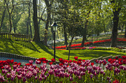 Colored Flower Framed Prints - The Tulip Garden Framed Print by Ayhan Altun