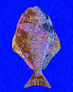 Schools Digital Art Metal Prints - The Ugly Fish 20130723di Metal Print by Wingsdomain Art and Photography