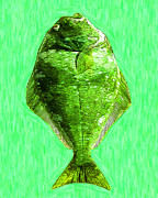 Schools Digital Art Prints - The Ugly Fish 20130723dip68 Print by Wingsdomain Art and Photography
