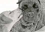 Photo Realism Drawings - The Unconditional Love Of Dogs by Sarah Batalka