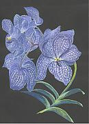 Lilac Drawings Posters - The Vanda Orchid Poster by Carol Wisniewski