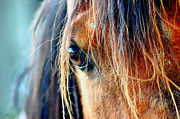 Horses Metal Prints - The View Metal Print by Emily Stauring
