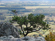 Ozark Mountains Photos - The View by Gary and Loretta Bullock
