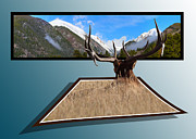 Bull Elk Posters - The View Poster by Shane Bechler
