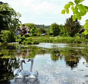 Swans... Mixed Media - The Village Pond by Morag Bates
