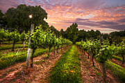 Grapevine Photos - The Vineyard at Sunset by Debra and Dave Vanderlaan