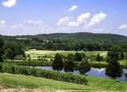 Wine Vineyard Photo Originals - The Vineyard by Carlton Cates