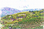 Napa Valley Vineyard Paintings - The Vineyard by Kirt Tisdale