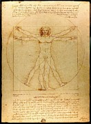 Historical Document Posters - The Vitruvian Man Poster by Mountain Dreams