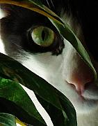 Cats Metal Prints - The  Voyeur Metal Print by Lynn Andrews