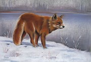 Fox Pastels Prints - The Waiting Game Print by Cynthia House