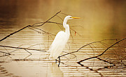 Louisiana Heron Prints - The Waiting Game Print by Scott Pellegrin