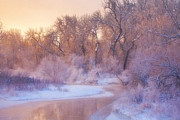 Freezing Photo Metal Prints - The Warmth of Winter Metal Print by Darren  White