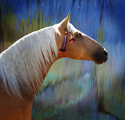 Horse Images Digital Art Prints - The Warrior Print by Melinda Hughes-Berland