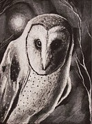 Owls Drawings - The Watcher 2 by Amber Stanford