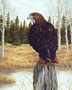Red Tail Hawk Paintings - The Watchful Eye by Rick Bainbridge