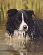 Collie Framed Prints - The Water Baby Framed Print by John Silver