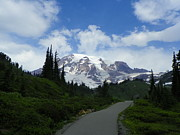 Wildflowers Mixed Media Posters - The Way to Paradise - Mount Rainier National Park Poster by Photography Moments - Sandi