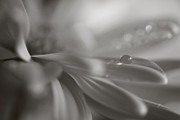 Black And White Floral Art - The Way Your Eyes Sparkle by Laurie Search