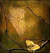 Spider Web Framed Prints - The Web We Weave Framed Print by Darren Fisher