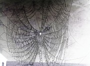 The Web We Weave Print by Margaret Hamilton