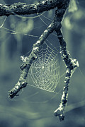 Dew Prints - The Webs We Weave Print by Edward Fielding
