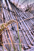 Sea Oats Prints - The Weed Print by JC Findley