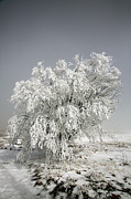 Snowstorm Photos - The Weight of Winter by John Haldane