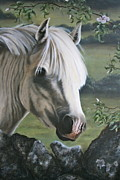 Stone Pony Painting Framed Prints - The Welshman Framed Print by Beth Munnings