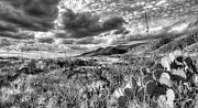 Desert Prints - The West Texas Landscape Print by JC Findley