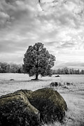 Battlefield Site Prints - The Wheatfield 8D00094 Print by Guy Whiteley