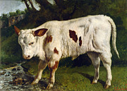 Courbet Posters - The White Calf Poster by Gustave  Courbet
