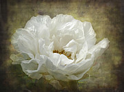 Barbara Orenya Prints - The White Peony Print by Barbara Orenya